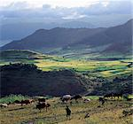 A view of spectacular mountain scenery between Senbete and Kombolcha.Ethiopia is a land of vast horizons and dramatic scenery. The weathered mountains in the Ethiopian Highlands exhibit layer upon layer of volcanic material, which built the plateau into Africas most extensive upland region.