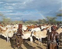 Hamar women dance around cattle at a Jumping of the Bull ceremony as a rainbow gives colour to a threatening sky overhead.The Hamar are semi nomadic pastoralists of Southwest Ethiopia whose women wear striking traditional dress and style their red ochre hair mop fashion.The phallic protrusion of the women's chokers denote they are their husbands first wives.The Jumping of the Bull ceremony is a ri Stock Photo - Premium Rights-Managednull, Code: 862-03820517