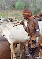 A Hamar woman dances around cattle while she blows a tin trumpet at a Jumping of the Bull ceremony.The Hamar are semi nomadic pastoralists of Southwest Ethiopia whose women wear striking traditional dress and style their red ochred hair mop fashion.The Jumping of the Bull ceremony is a rite of passage for young men. Stock Photo - Premium Rights-Managednull, Code: 862-03820521