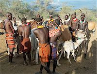 Hamar men line up steers at a Jumping of the Bull ceremony.The semi nomadic Hamar of Southwest Ethiopia embrace an age grade system that includes several rites of passage for young men.After the ceremony, the initiate attains full manhood and is permitted to marry Stock Photo - Premium Rights-Managednull, Code: 862-03820522