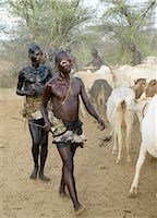 With oiled and blackened bodies, a group of young men who have already completed their initiation ceremony participate in a Hamar Bull Jumping ceremony of a friend by circling the cattle before the climax to the ceremony takes place.After the ceremony, the initiate attains full manhood and is permitted to marry Stock Photo - Premium Rights-Managednull, Code: 862-03820523