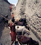 Deep Maasai wells at Loibor Serrit where cattle paths are cut deep into the soil to allow livestock nearer to the source of water. Despite this immense amount of manual labour.Four fit, young men are necessary to bring water to the stock troughs about 30 feet above the water level at the bottom of the hand dug wells. Stock Photo - Premium Rights-Managed, Artist: AWL Images, Code: 862-03821012