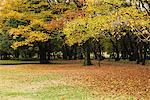 Park In Autumn Stock Photo - Premium Rights-Managed, Artist: Aflo Relax, Code: 859-03839300