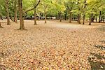 Park In Autumn Covered By Leaves Stock Photo - Premium Rights-Managed, Artist: Aflo Relax, Code: 859-03839301