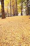 Ground Covered By Leaves Stock Photo - Premium Rights-Managed, Artist: Aflo Relax, Code: 859-03839304