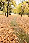 Park In Autumn Covered With Leaves Stock Photo - Premium Rights-Managed, Artist: Aflo Relax, Code: 859-03839307