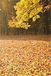 Park Covered With Leaves In Autumn Stock Photo - Premium Rights-Managed, Artist: Aflo Relax, Code: 859-03839313