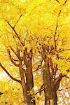 Tree In Fall Color Stock Photo - Premium Rights-Managed, Artist: Aflo Relax, Code: 859-03839315