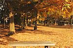 Bench In A Park In Autumn Stock Photo - Premium Rights-Managed, Artist: Aflo Relax, Code: 859-03839316