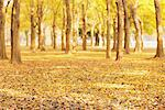 Trees In Autumn Stock Photo - Premium Rights-Managed, Artist: Aflo Relax, Code: 859-03839318