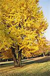 Trees In Fall Color Stock Photo - Premium Rights-Managed, Artist: Aflo Relax, Code: 859-03839556