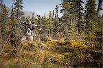 Male bow hunter aims with a compound bow while bow hunting in a Black Spruce forest in the Eklutna Lake area, Chugach Mountains, Chugach State Park, Southcentral Alaska, Autumn Stock Photo - Premium Rights-Managed, Artist: AlaskaStock, Code: 854-03845013