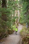 Woman hiking on Winner Creek Trail in Spruce and Hemlock boreal rain forest near Girdwood, Chugach National Forest, Southcentral Alaska, Autumn Stock Photo - Premium Rights-Managed, Artist: AlaskaStock, Code: 854-03845031