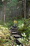 Woman hiking on a boardwalk path along Winner Creek Trail in a spruce and hemlock boreal rain forest near Girdwood, Chugach National Forest, Southcentral Alaska, Autumn Stock Photo - Premium Rights-Managed, Artist: AlaskaStock, Code: 854-03845036