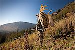 Male moose hunter stops to enjoy the view as he hikes out of hunt area with trophy moose antler on his pack, Bird Creek drainage area, Chugach Mountains, Chugach National Forest, Southcentral Alaska, Autumn Stock Photo - Premium Rights-Managed, Artist: AlaskaStock, Code: 854-03845058