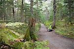 Woman hiking on Winner Creek Trail in Spruce and Hemlock boreal rain forest near Girdwood, Alaska.  Chugach National Forest   fall  Southcentral, Alaska/nMR JSP-02 Stock Photo - Premium Rights-Managed, Artist: AlaskaStock, Code: 854-03845093