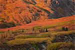Scenic view of a Fall colored landscape between Haines and Haines Junction, Yukon Territory, Canada Stock Photo - Premium Rights-Managed, Artist: AlaskaStock, Code: 854-03845146