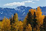 Scenic view of mountains and colorful Aspen and Willow trees along the Alaska Highway between Haines and Haines Junction, Yukon Territory, Canada, Autumn Stock Photo - Premium Rights-Managed, Artist: AlaskaStock, Code: 854-03845163