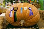Winning giant pumpkin grown by Dale Marshall weighing 1101 pounds at the Alaska State Fair in Palmer, Matanuska- Susitna Valley, Southcentral Alaska, Autumn Stock Photo - Premium Rights-Managed, Artist: AlaskaStock, Code: 854-03845175
