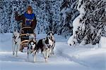 Musher racing in the Lake Memorial Race, Tozier Track, Anchorage, Southcentral Alaska, Winter Stock Photo - Premium Rights-Managed, Artist: AlaskaStock, Code: 854-03845838
