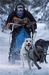 Musher racing in the Lake Memorial Race, Tozier Track, Anchorage, Southcentral Alaska, Winter Stock Photo - Premium Rights-Managed, Artist: AlaskaStock, Code: 854-03845839