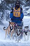 Musher racing in the Lake Memorial Race, Tozier Track, Anchorage, Southcentral Alaska, Winter Stock Photo - Premium Rights-Managed, Artist: AlaskaStock, Code: 854-03845840