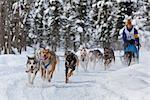 Courney Moore and team mushing during the 2010 Fur Rondy Sled Dog Championships, Anchorage, Southcentral Alaska, Winter Stock Photo - Premium Rights-Managed, Artist: AlaskaStock, Code: 854-03845843