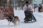 Bill Kornmuller and team mushing during the 2010 Fur Rondy Sled Dog Championships, Anchorage, Southcentral Alaska, Winter Stock Photo - Premium Rights-Managed, Artist: AlaskaStock, Code: 854-03845845