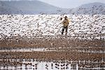 Birdwatcher photographs a large flock of Western Sandpipers and Dunlins on mud flats of Hartney Bay during spring migration, Copper River Delta, Southcentral Alaska Stock Photo - Premium Rights-Managed, Artist: AlaskaStock, Code: 854-03845939