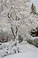 Fresh Winter Snowfall in Dunbar-Southlands Neighbourhood, Vancouver, British Columbia, Canada Stock Photo - Premium Rights-Managednull, Code: 700-03848707