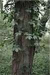 Close-up of Tree Trunk, Stephen F Austin Park, Sealy, Texas, USA Stock Photo - Premium Royalty-Free, Artist: Mark Peter Drolet, Code: 600-03849058