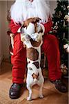 Santa Claus with Dog Jumping onto Lap Stock Photo - Premium Rights-Managed, Artist: Siephoto, Code: 700-03849049