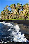 Coconut Palm Trees and Black Sand Beach, Punaluu Beach, The Big Island Hawaii