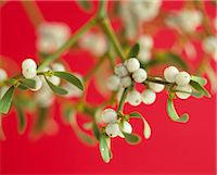 Mistletoe plant with red background Stock Photo - Premium Royalty-Freenull, Code: 6102-03859443