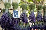Bunches of lavender for sale in the market in Uzes, Provence, France, Europe Stock Photo - Premium Rights-Managed, Artist: Robert Harding Images, Code: 841-03867887