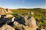 Granite outcrop at Holwell Tor, looking over bracken covered moorland to Saddle Tor, Dartmoor National Park, Devon, England, United Kingdom, Europe Stock Photo - Premium Rights-Managed, Artist: Robert Harding Images, Code: 841-03870028