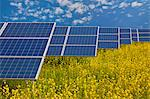 Solar panels in rapeseed field Stock Photo - Premium Royalty-Free, Artist: Bryan Reinhart           , Code: 649-03883515