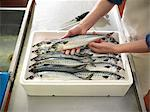 Boxed mackerel fish in plant Stock Photo - Premium Royalty-Freenull, Code: 649-03883808