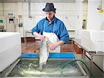 Worker filleting salmon in plant Stock Photo - Premium Royalty-Freenull, Code: 649-03883809