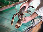 Worker holding lobster in plant Stock Photo - Premium Royalty-Freenull, Code: 649-03883814