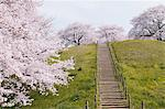 Stairway In Field Of Cherry Blossom Tree Stock Photo - Premium Rights-Managed, Artist: Aflo Relax, Code: 859-03884965