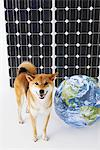 Shiba Inu Standing In Front Of Solar Panel With Globe Stock Photo - Premium Rights-Managed, Artist: Aflo Relax, Code: 859-03885147