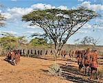 After 2-3 months seclusion, Pokot initiates leave their camp in single file to celebrate Ngetunogh.  They must wear goatskins, conceal their faces with masks made from wild sisal (sansevieria) and carry bows with blunt arrows until this ceremony is over. Stock Photo - Premium Rights-Managed, Artist: AWL Images, Code: 862-03888758