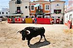 Traditional running of wild bulls in Alcochete, Portugal