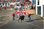 Bullfight (tourada a corda) in Porto de Pipas. Angra do Heroismo. Terceira, Azores islands, Portugal Stock Photo - Premium Rights-Managed, Artist: AWL Images, Code: 862-03889240
