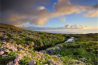 Central plateau with hydrangeas at dusk. Flores, Azores islands, Portugal Stock Photo - Premium Rights-Managed, Artist: AWL Images, Code: 862-03889281