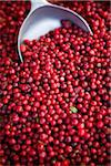 Cranberries with Scoop, Viktualienmarkt, Munich, Germany Stock Photo - Premium Rights-Managed, Artist: Elke Esser, Code: 700-03901060