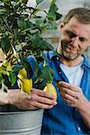 Man with a lemon tree. Stock Photo - Premium Royalty-Free, Artist: Photocuisine, Code: 6102-03905363