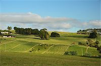 farming (raising livestock) - Farmland near Yolla, Tasmania, Australia Stock Photo - Premium Rights-Managednull, Code: 700-03907007