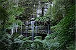 Russell Falls, Mount Field National Park, Tasmania, Australia Stock Photo - Premium Rights-Managed, Artist: Jochen Schlenker, Code: 700-03907018